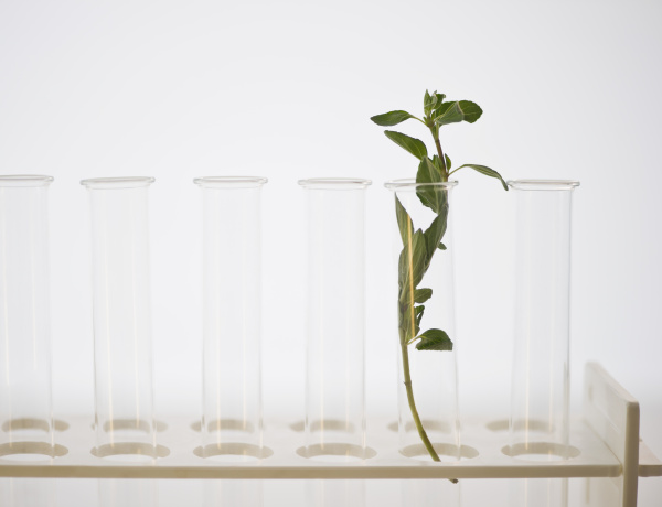 forschung frische horizontal waagerecht reagenzglas labor