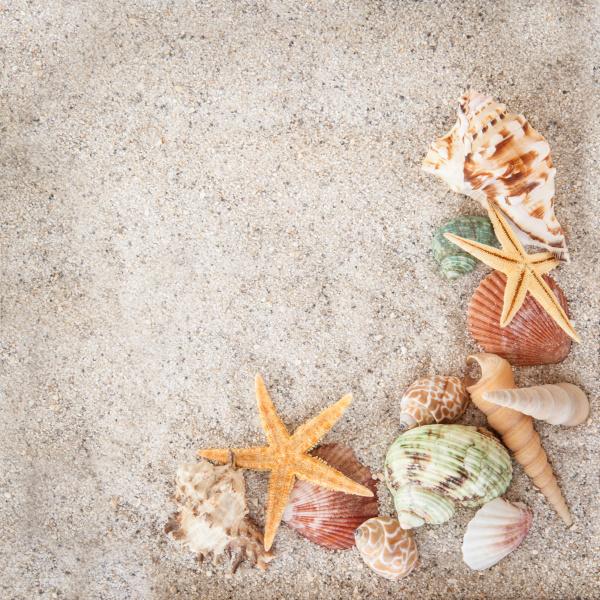 strandurlaub konzept mit sand und muscheln