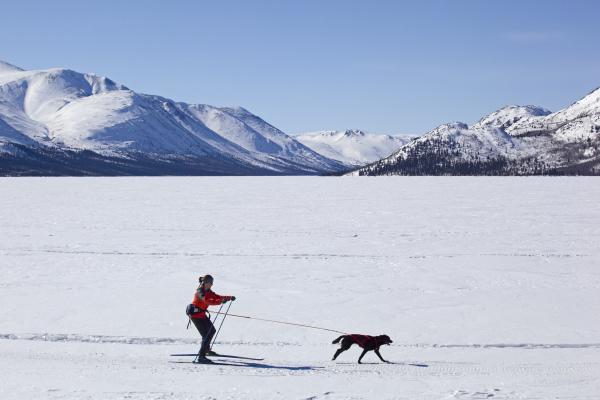 frau beim skijoring skifahren mit