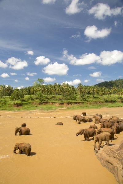 hochwinkelansicht der herde afrikanischer elefanten in