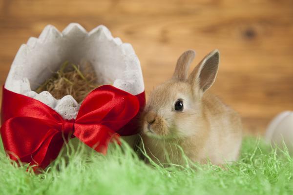 kaninchen mit ostern auf hoelzernem hintergrund