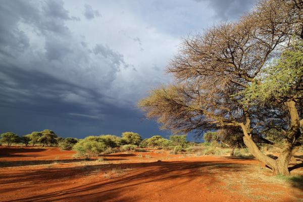 afrikanische landschaft vor stuermischem himmel