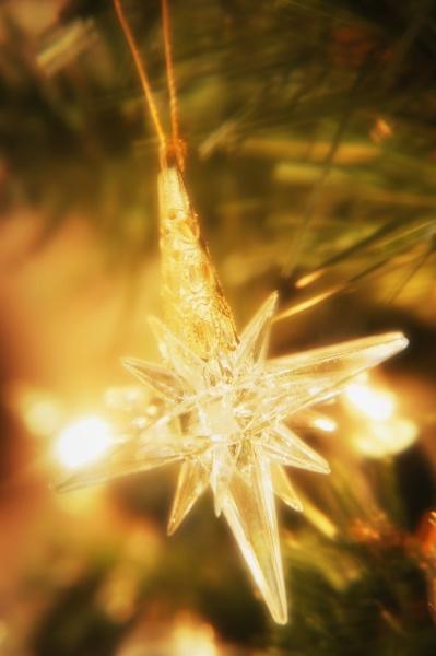 baum winter feiern feiernd feiert verzierung