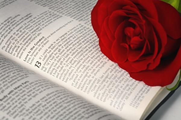 rote rose auf offener bibel