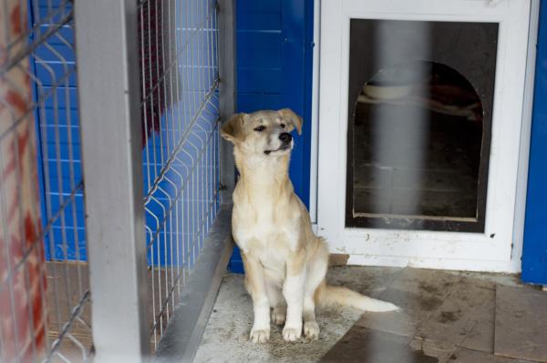 beige schoener hund im tierheim