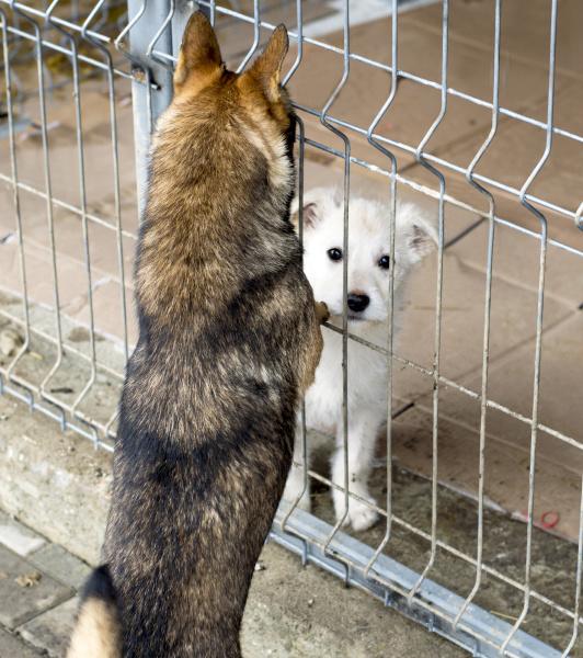 eine gegenansicht von zwei hunden im