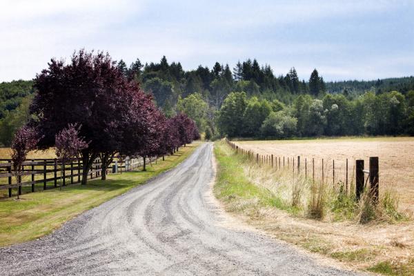 feldweg zwischen grasfeldern in laendlicher landschaft