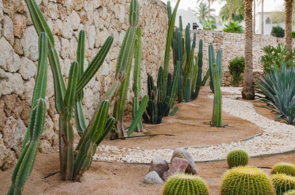 gepflegter park mit palmen und kakteen