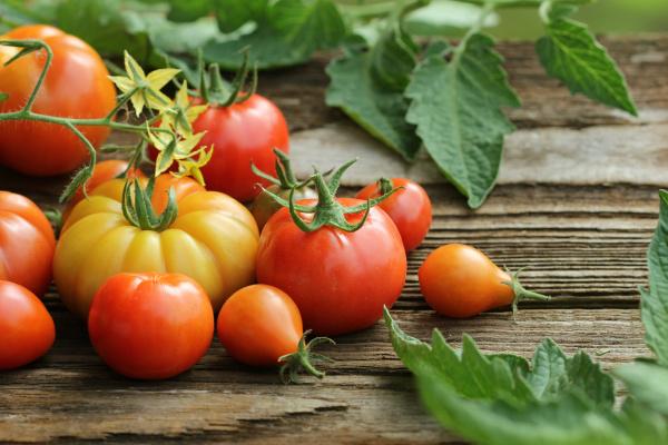 frische bunte reife tomaten auf holzbrett