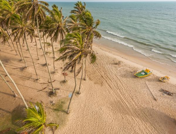 luftaufnahme von palmen und meer am