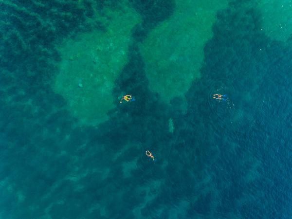 luftaufnahme der gruppe schwimmen mit flippern