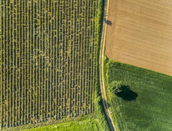 ariel ansicht der landwirtschaftlichen felder in