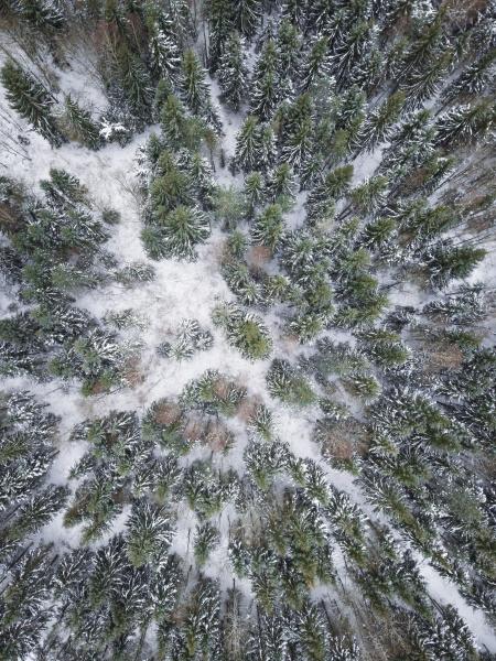 luftaufnahme eines verschneiten waldes in estland
