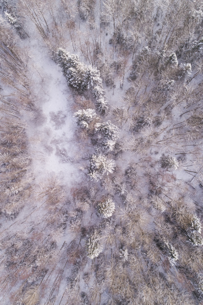 luftaufnahme des verschneiten bunten waldes von