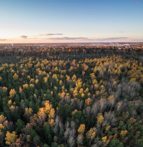 luftaufnahme eines bunten pinienwaldes bei sonnenuntergang