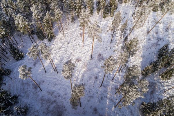 luftaufnahme des verschneiten waldes in estland