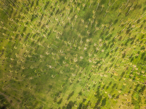 luftaufnahme eines palmenwaldes an der kueste