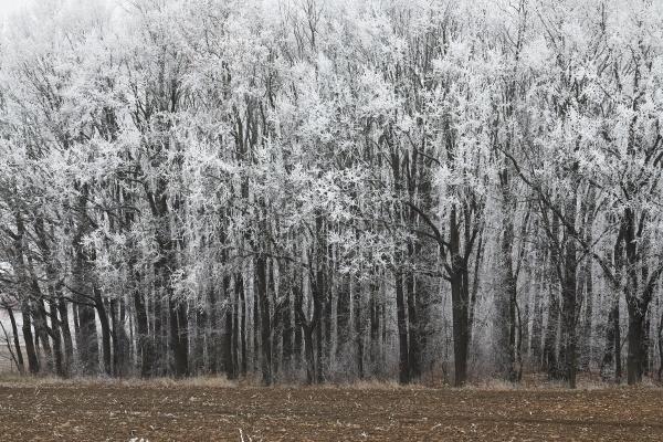winterwaldbaeume