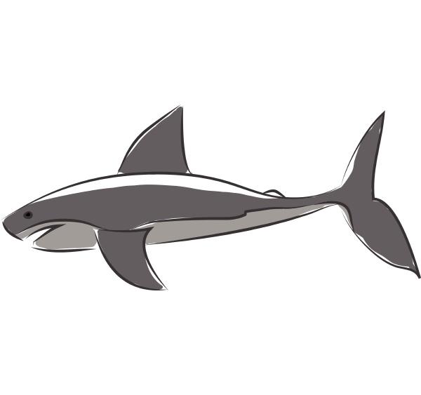 ein blauer hai beim springen aus