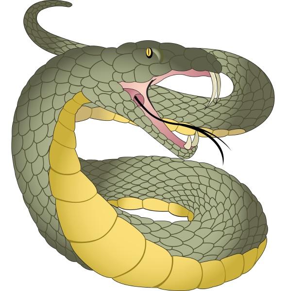 snake, , illustration - 27528515