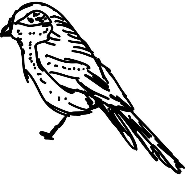 vogelzeichnung illustration vektor auf weissem hintergrund