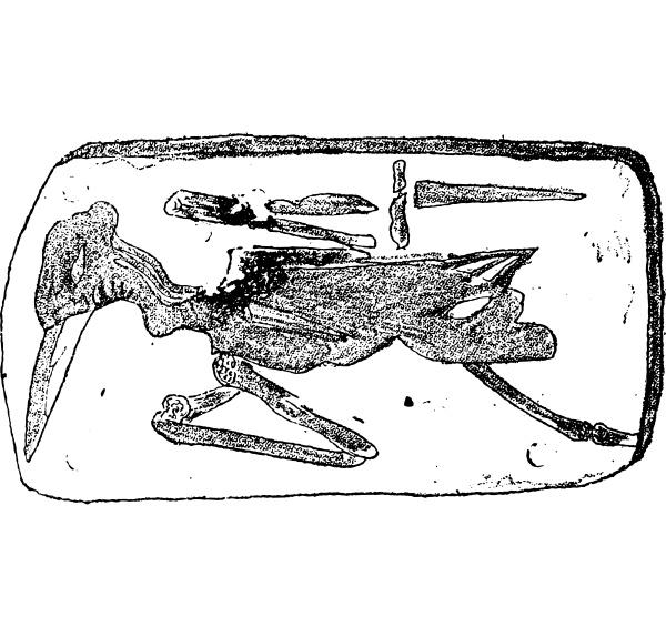 vogel von montmartre wader vintage gravur
