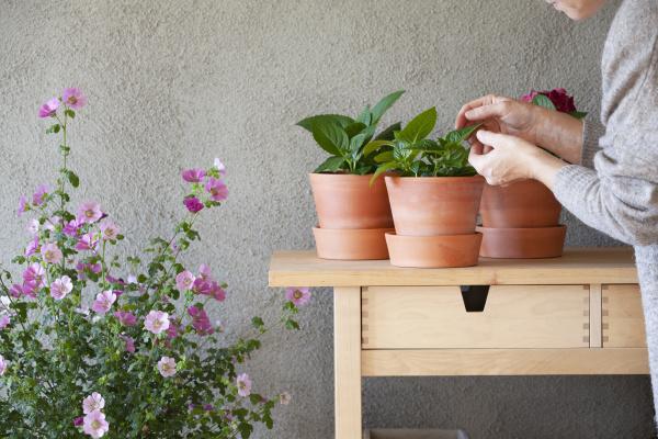 frau die sich um topfpflanzen im