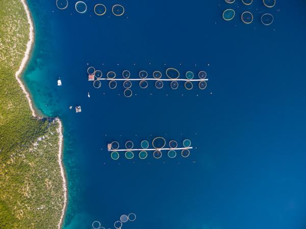 luftaufnahme der fischzucht an der adria