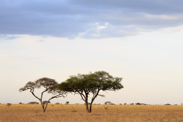 serengeti nationalpark landschaft tansania afrika