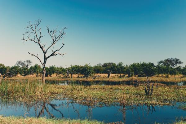moremi wildreservat landschaft botswana afrika wildnis