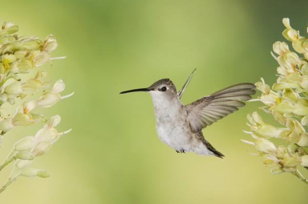natur fauna