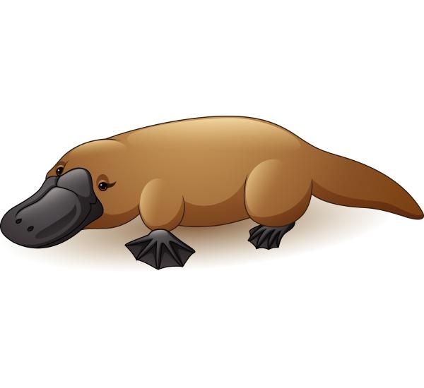 abbildung von platypus isoliert auf weissem