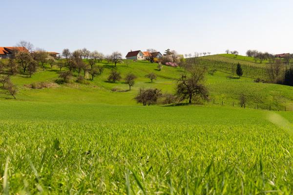 great, natural, landscape - 28005817