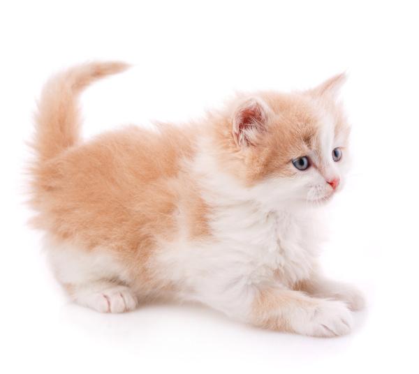 glueckliche katze auf weissem hintergrund eine