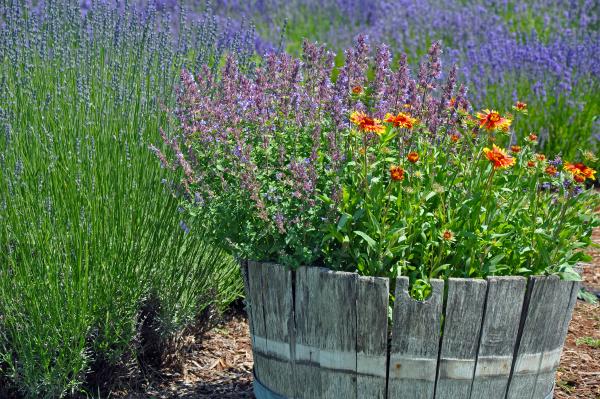 lavendel gartenpflanzer
