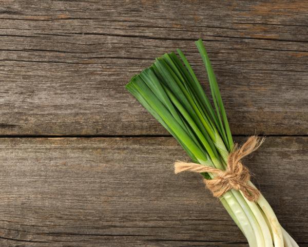 frische gruene zwiebelblaetter mit einem seil