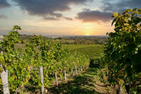 vineyard, of, the, jurancon, wine, in - 28215160