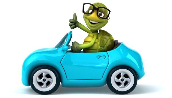 fun, turtle - 28218201