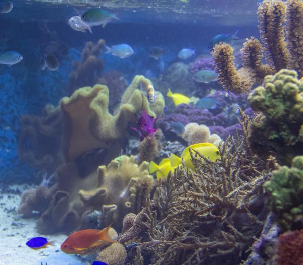 korallenrifflandschaft