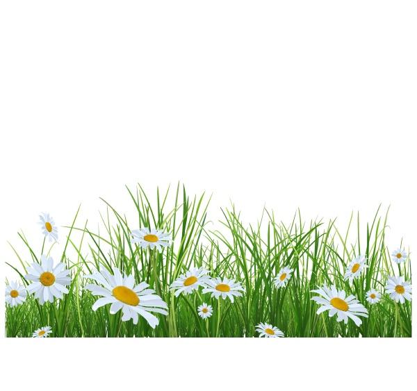 gras mit gaensebluemchen blumen