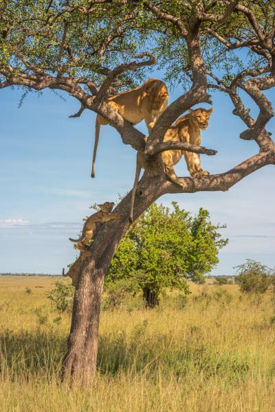 zwei junge klettern auf baum zu