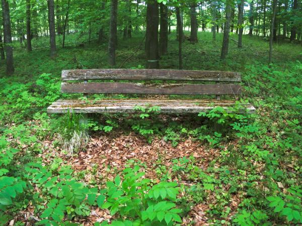 alte parkbank im gruenen wald