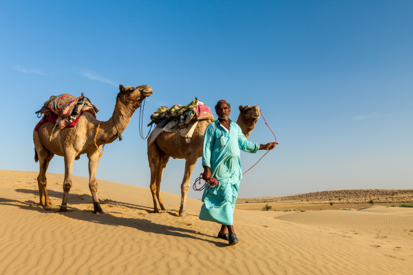 kameleer kameltreiber mit kamelen