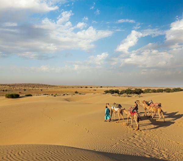 zwei, kameleer, , kameltreiber, , mit - 28467440