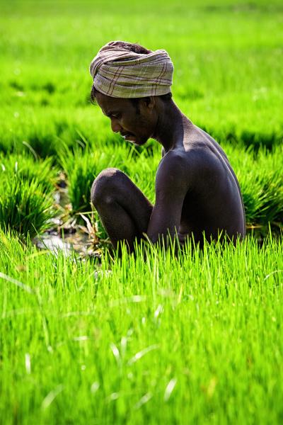landwirt woking in reisfeld tamil nadu