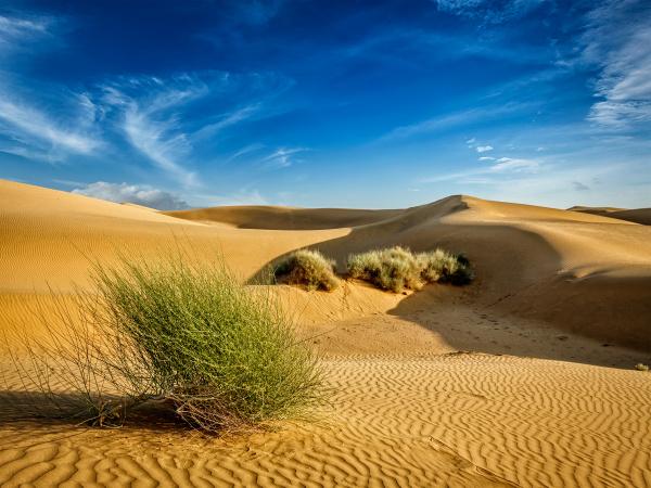 sanddünen, in, der, wüste - 28473843