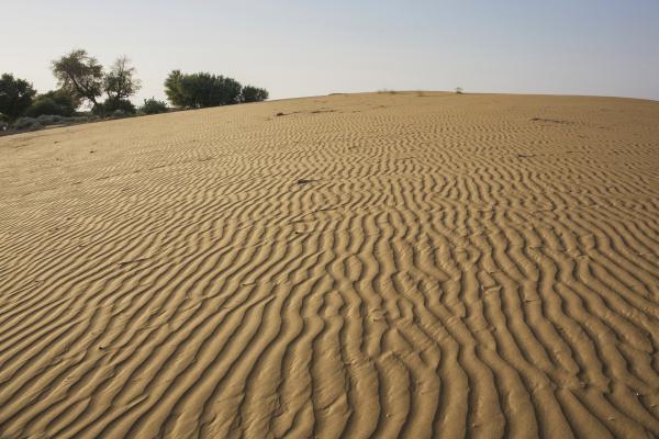 thar desert rajasthan indien
