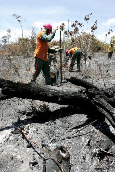 waldbrand in bahia