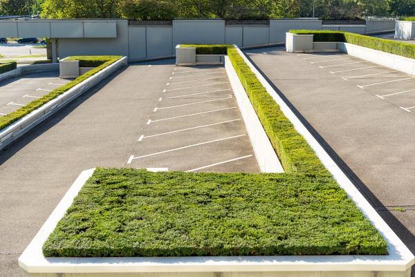 parkplatz mit buchsbaum angelegt