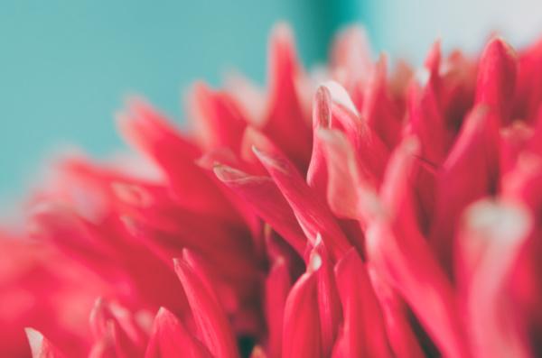 unfokussierter abstrakter floraler hintergrund